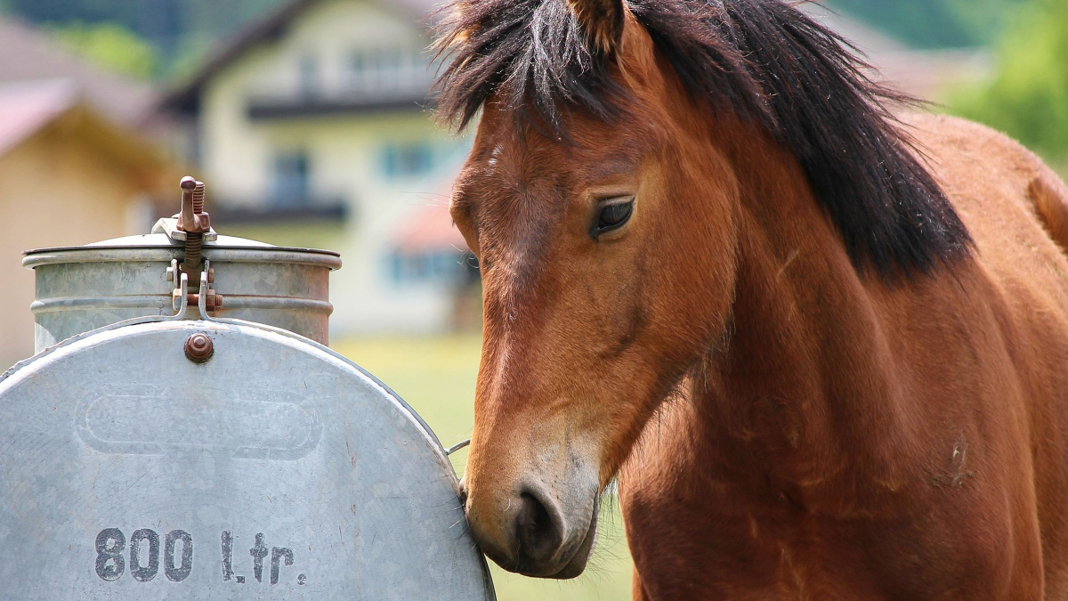 Which Water Trough Is The Best For Me?