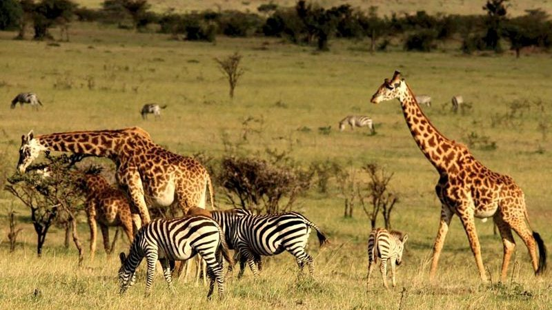 Get Lifetimeof experience from Your Wildlife Safari in Kenya