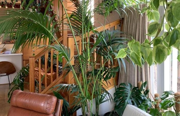 9 Important Things To Keep In Mind While While Setting Up Indoor Plants