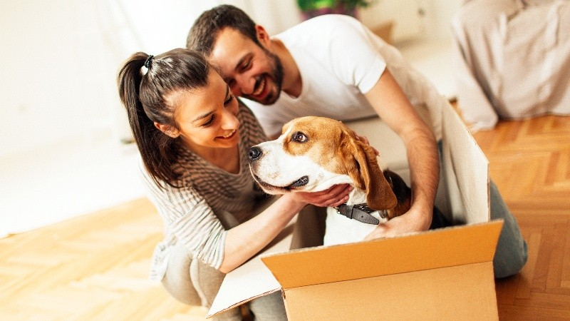 Pet transport: why choose a professional pet transport service from SHIPLY?