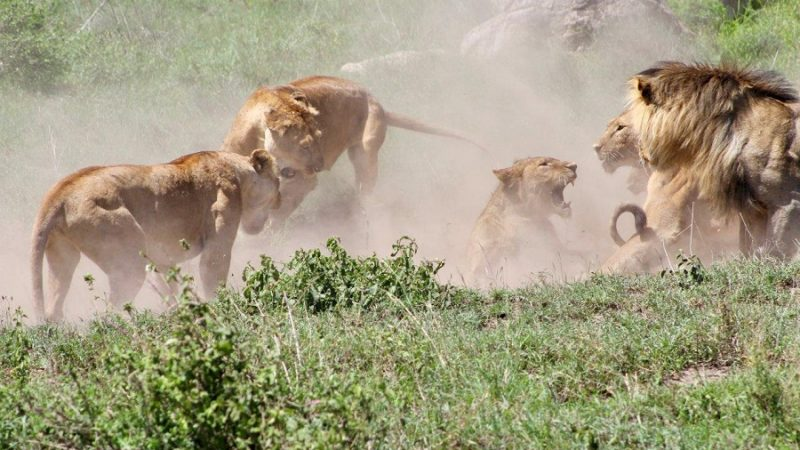Benefit From The Sensational And Remarkable Tanzania Family Safari