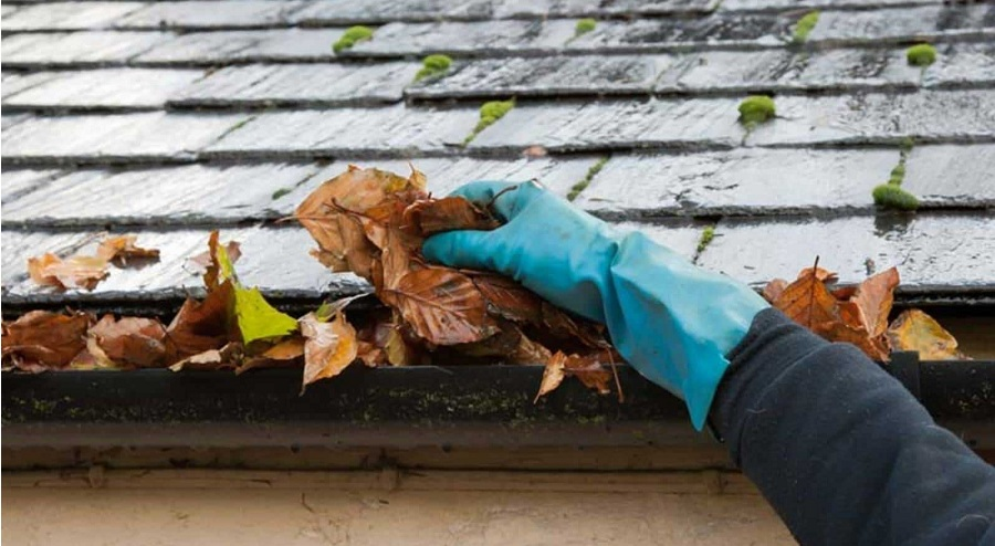 How to keep a healthy roof?