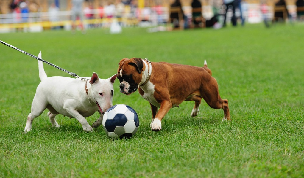 Sports to do With Your Dog