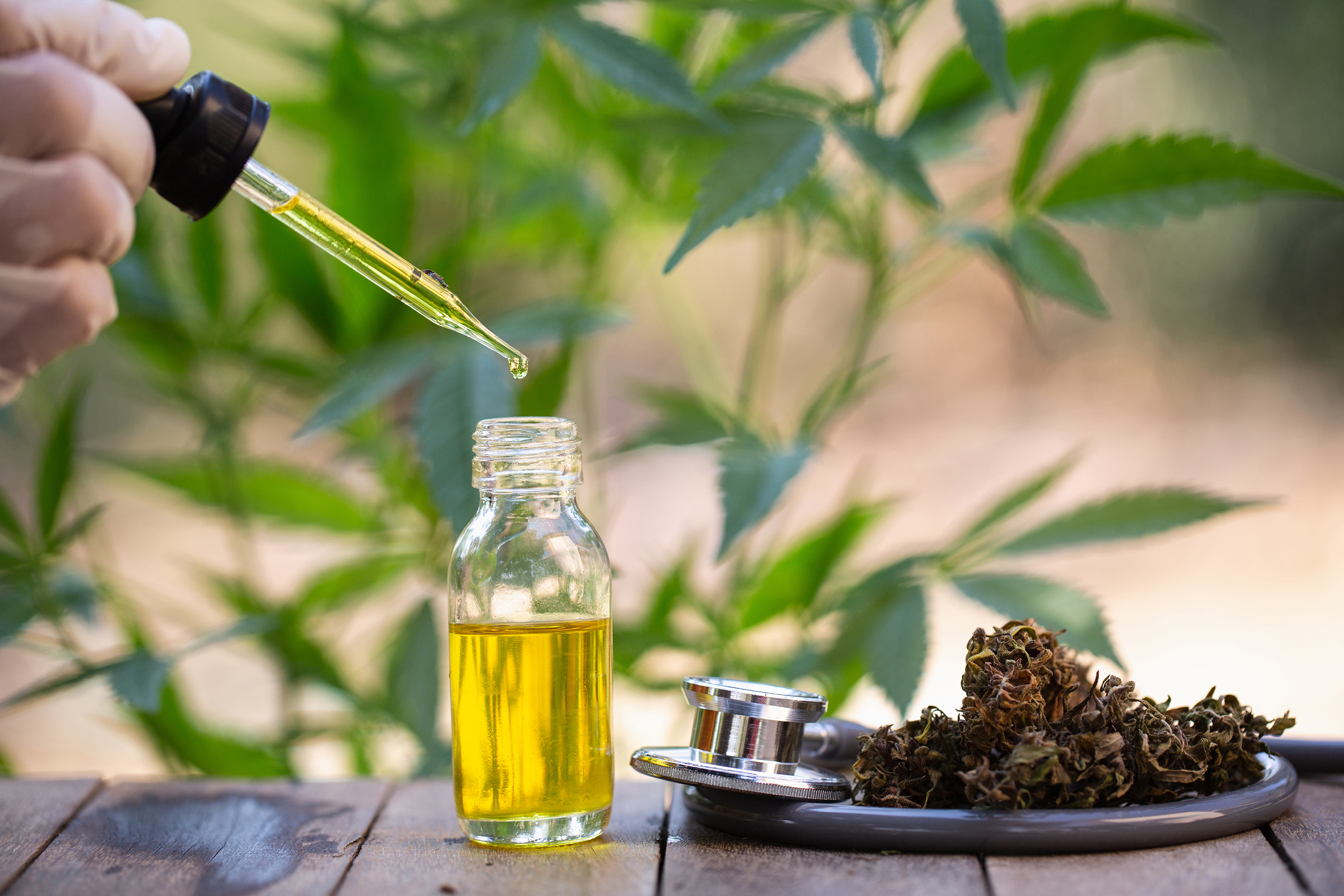3 of Best CBD Oil companies to Purchase From