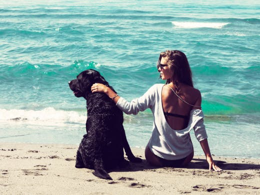Take your 'paw-ed' friend to a vacation along with you – A guide for the pet owners