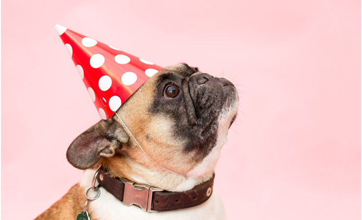 Top New Year's Resolutions For You and Your Pet For 2020