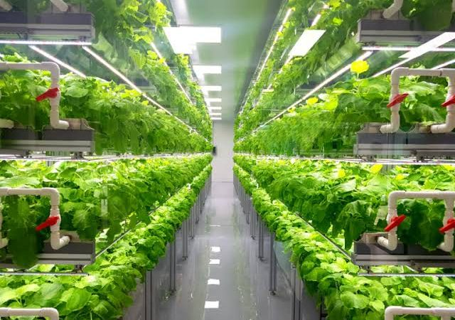 Information on greenhouse farming – How is it different from vertical farming?
